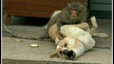 【我是熊猫唐山话剧情脑残解读第一期】狗ri与ri狗的区别