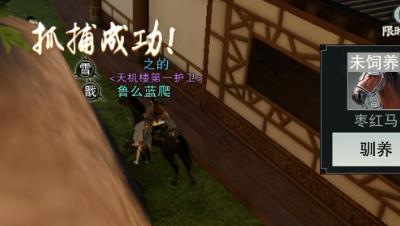 楚留香:免费获得黄金宝马,抓马原来这么简单,一抓一个准!